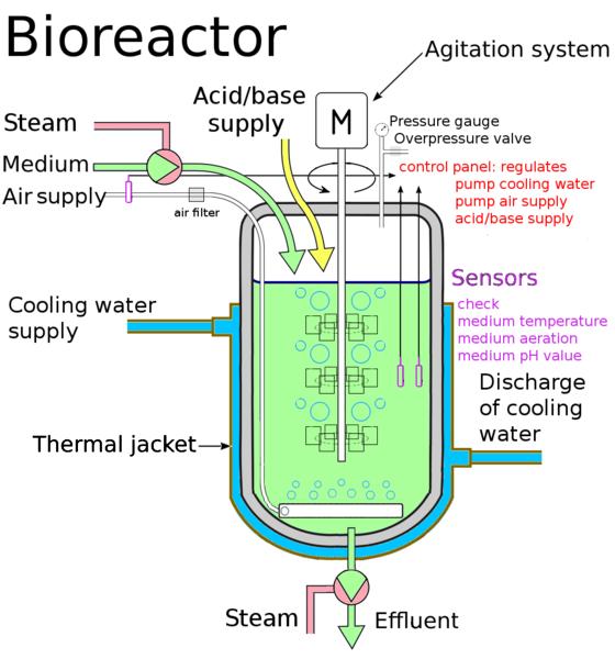 Biochemical Engineer